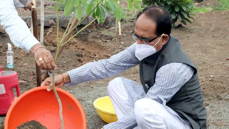 मुख्यमंत्री श्री शिवराज सिंह चौहान ने स्मार्ट सिटी पार्क में सप्तपर्णी का पौधा रोपा।