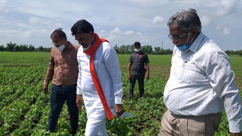 किसान कल्याण एवं कृषि विकास मंत्री श्री कमल पटेल ने हरदा जिले के ग्राम बारंगा में फसलों का जायजा लिया।