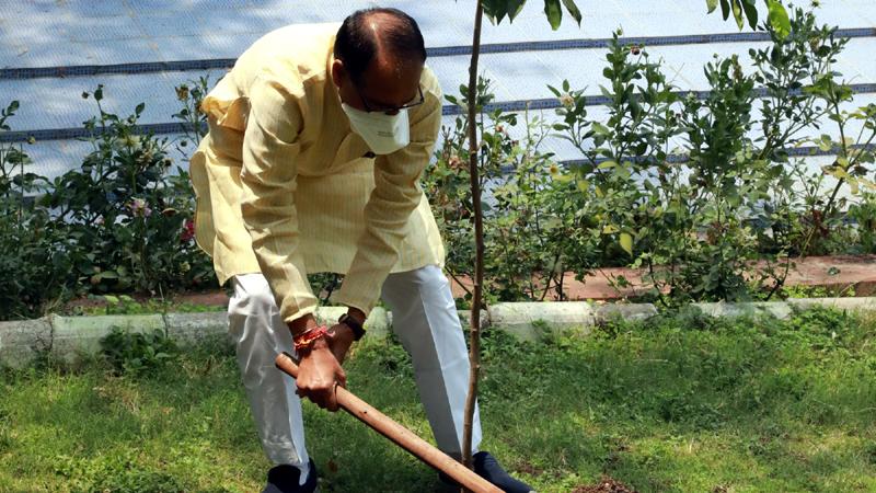 मुख्यमंत्री श्री शिवराज सिंह चौहान ने आज निवास पर मौलश्री का पौधा लगाया।