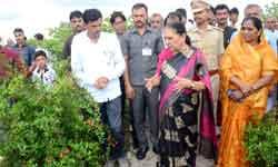 राज्यपाल श्रीमती आनंदीबेन पटेल ने आज खण्डवा जिले के छैगांवमाखन में प्रगतिशील किसान नरेन्द्र सिंह चौहान के खेत में उद्यानिकी फसलों को देखा।#$52744